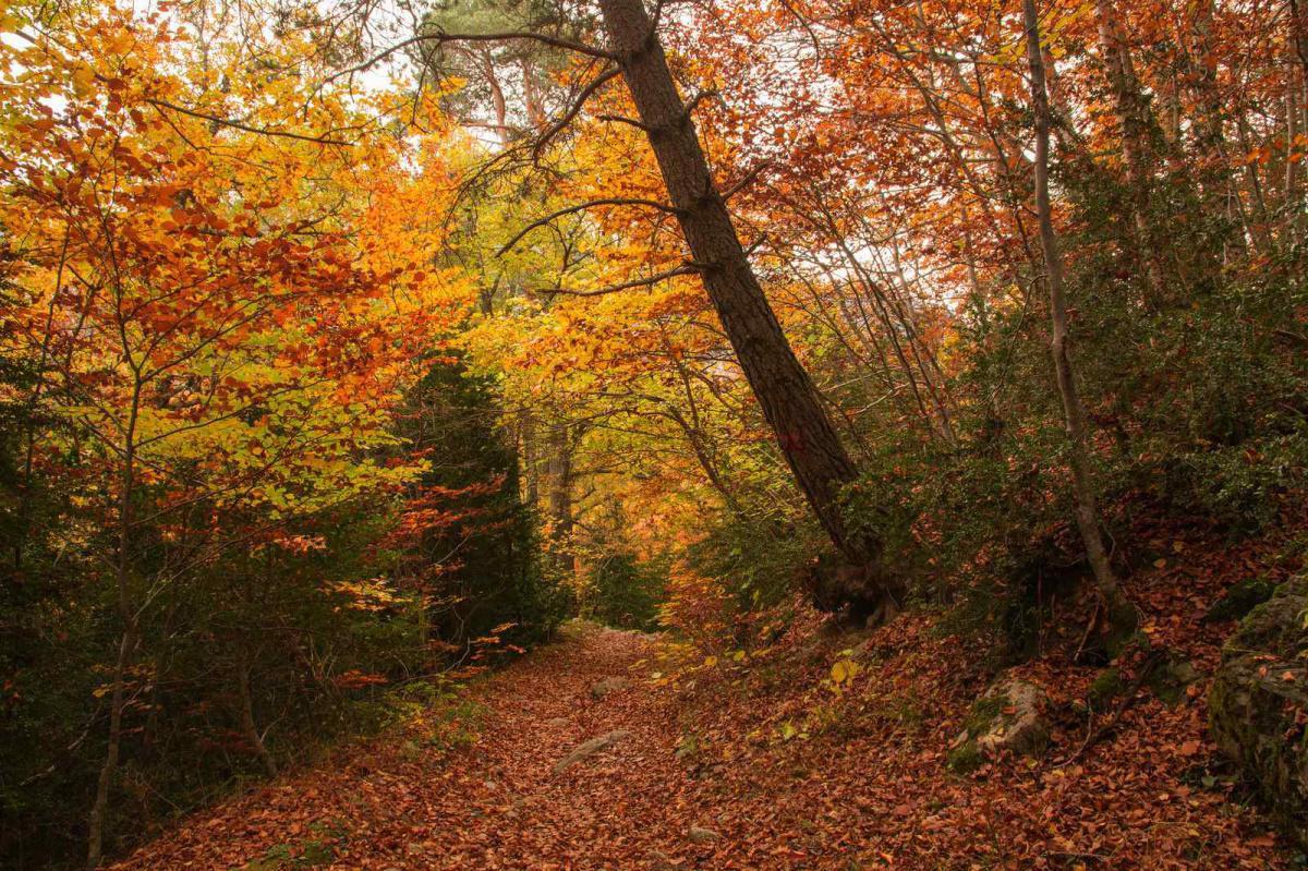 Bosque del Betato