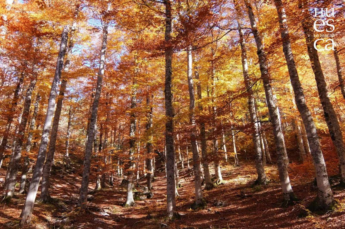 El Bosque de Gamueta