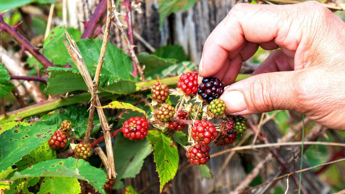 ♻️ Como Visitar sin dejar huella el Parque Natural de la Sierra y Cañones de Guara. 🌳💦 Obligaciones y Consejos