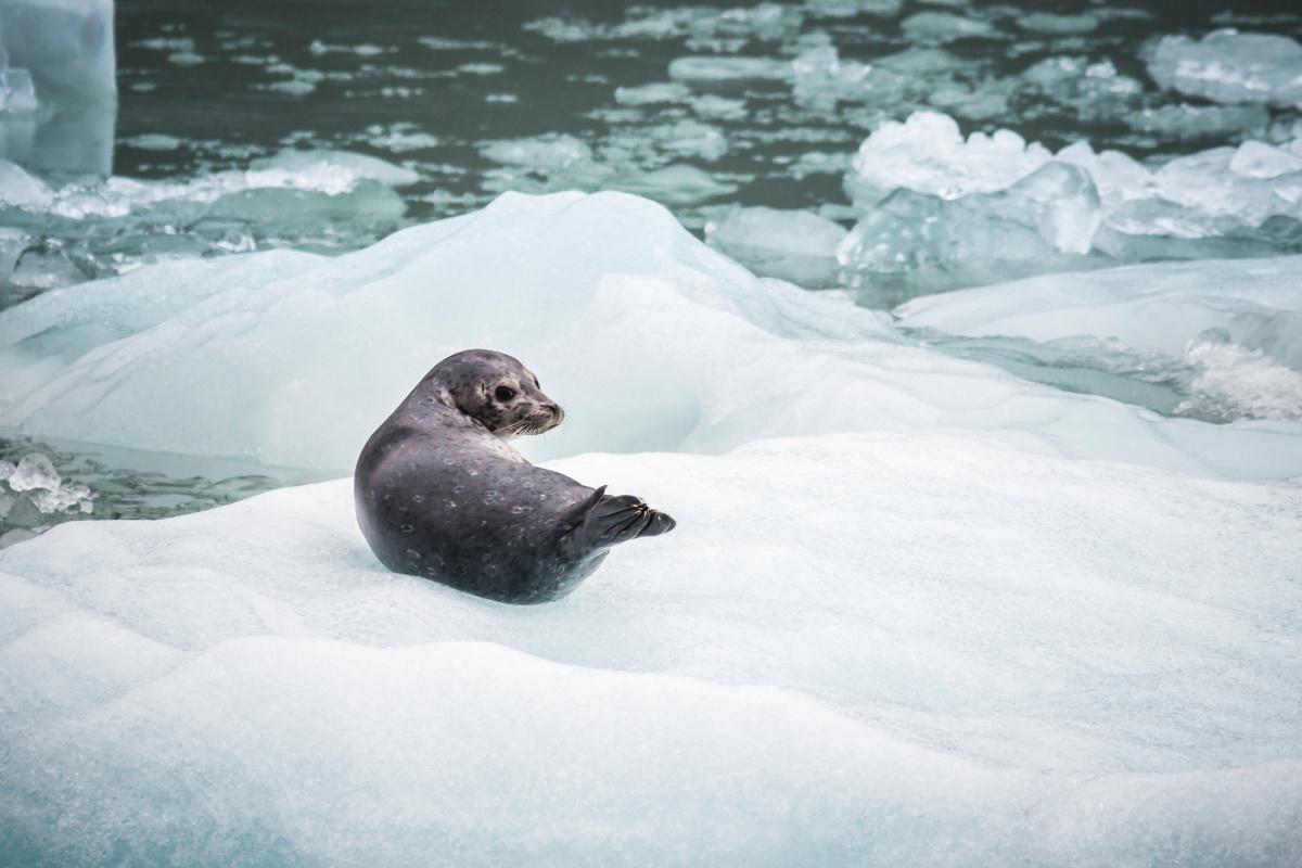 Voyage en bateau, direction le pôle Nord : 25 mn