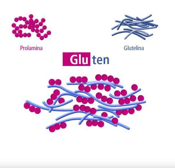 ¿Qué significa hablar de gluten?