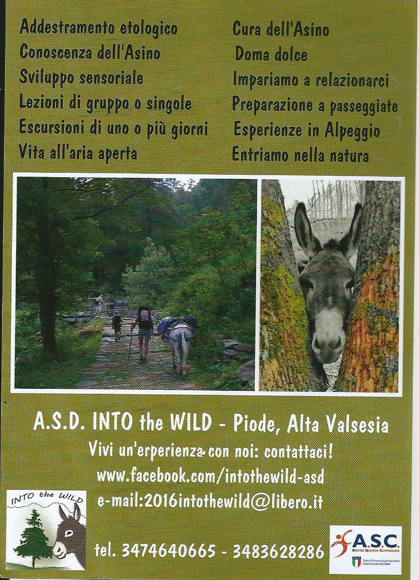 Into the wild, recreational activities whit donkeys for adults and children