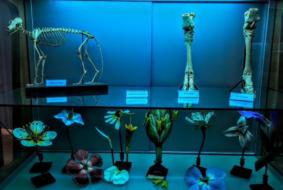 MAUS - Museo dell'ambiente - Universita del Salento