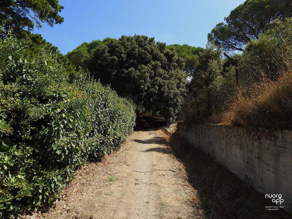 Sentiero 101 // Località Murrone