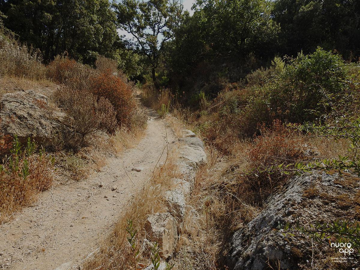 Sentiero 101 // Su gutturu 'e s'impredau - S'Iscala 'e Murrone