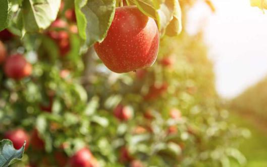 South Jersey Apple Fest