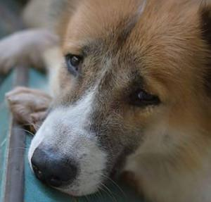 An Anathemic Existence: The case of Human ferocity in Animal abuse