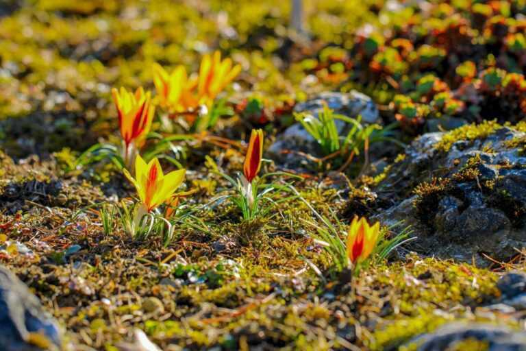 Frühlingserwachen – Wie uns die neue Jahreszeit Hoffnung schenken kann