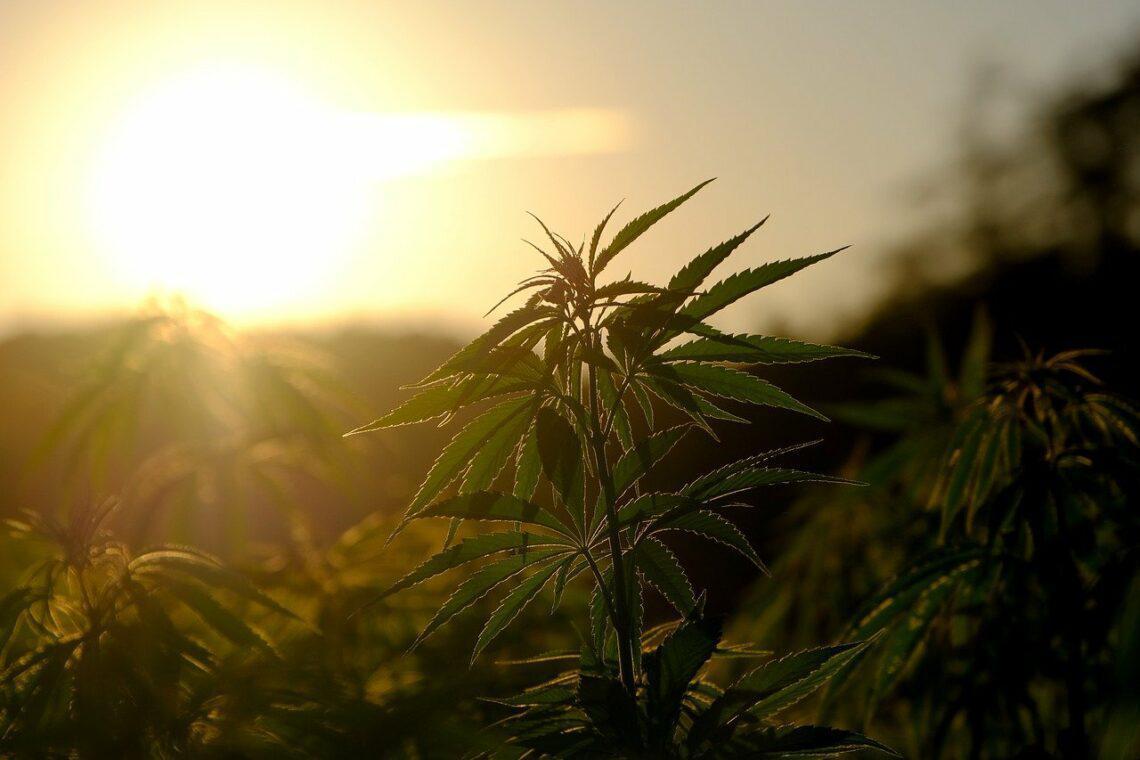 Die Wirkung von Cannabisöl einfach erklärt