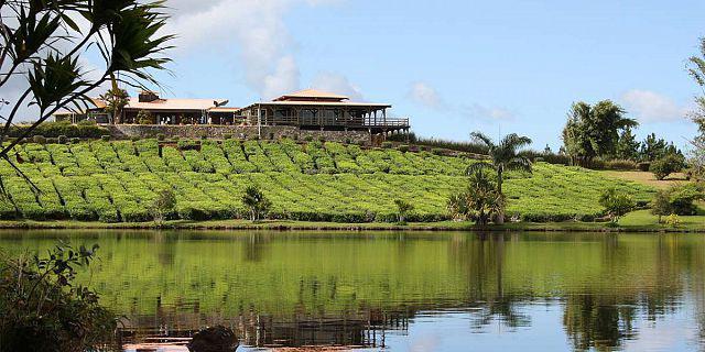 12-mauritius-tea-route-the