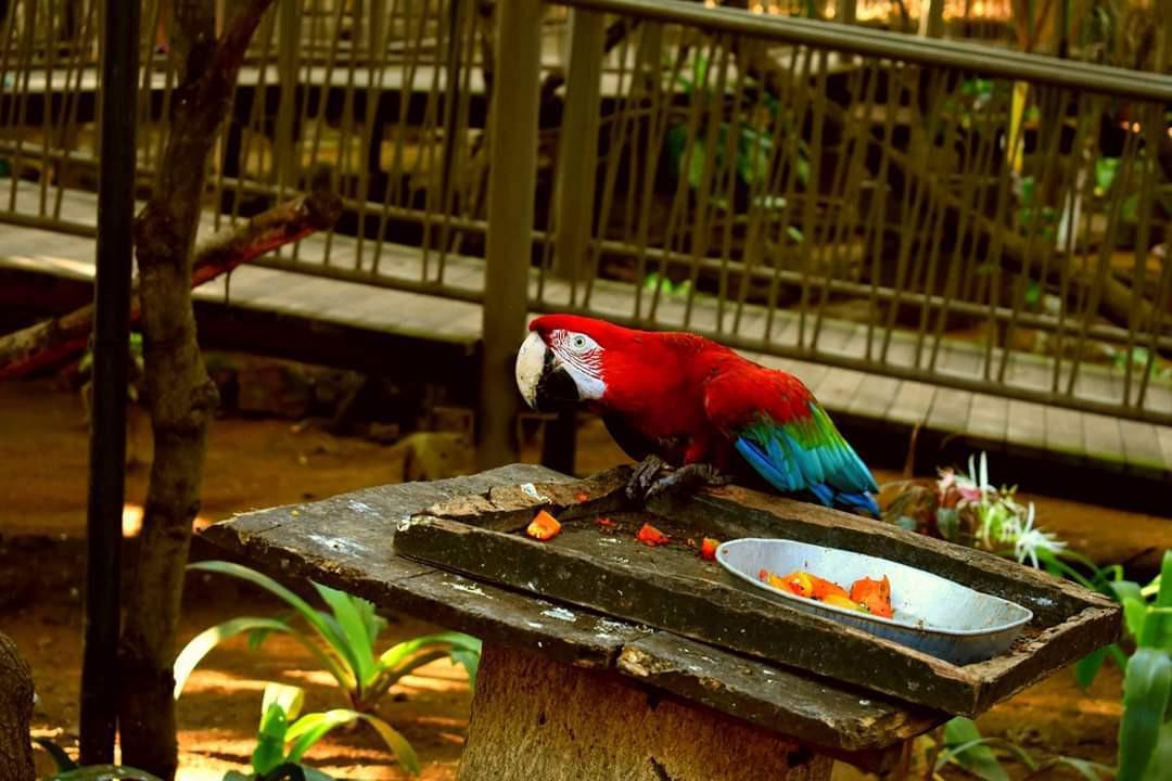 Parrot at Casela Park