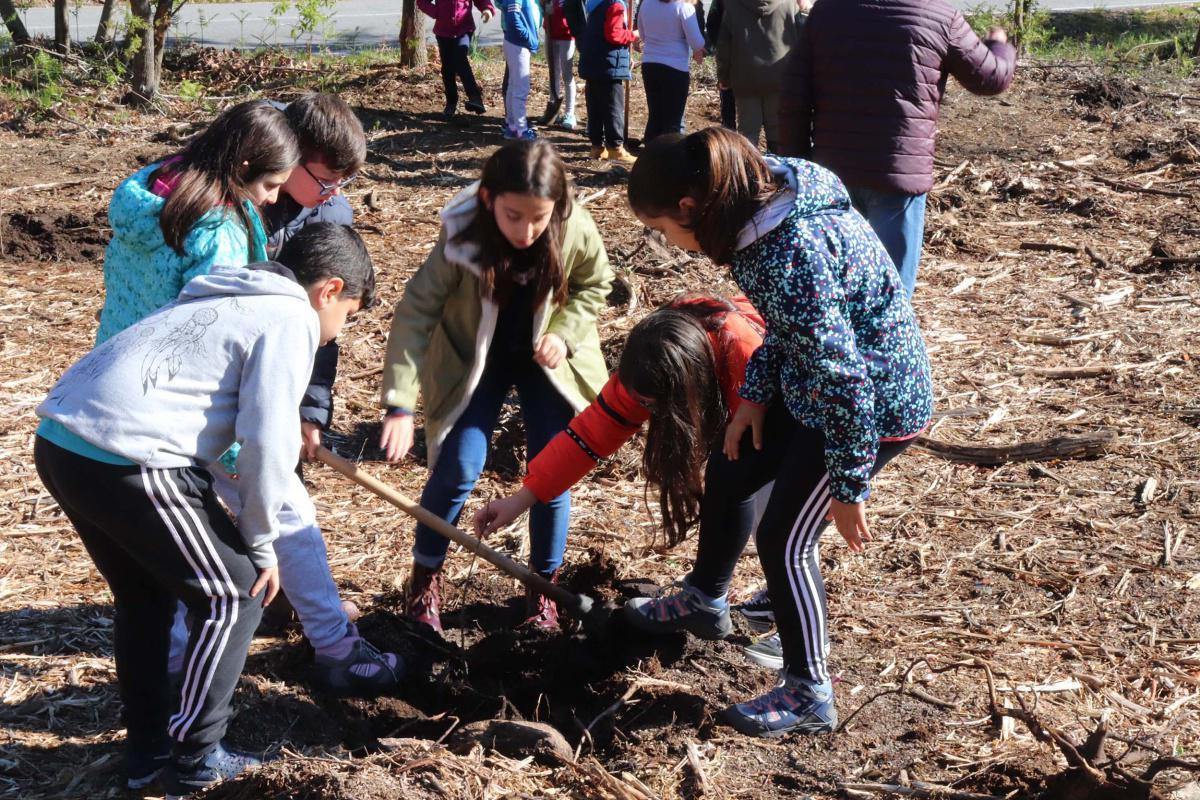 Sesenta nenos e nenas do CPI Cernadas de Castro plantan un cento de castiñeiros e carballos no monte de San Lourenzo