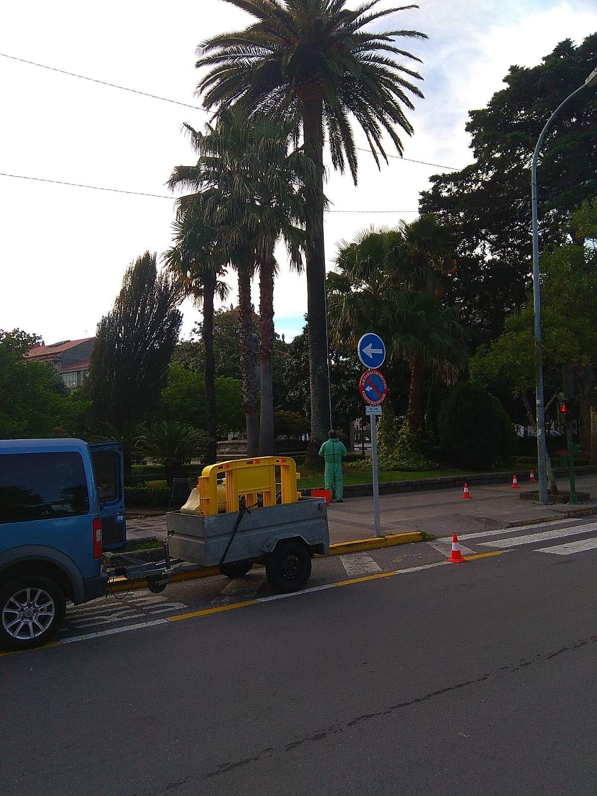 O Concello de Noia aplica un tratamento preventivo do picudo nas palmeiras da Alameda