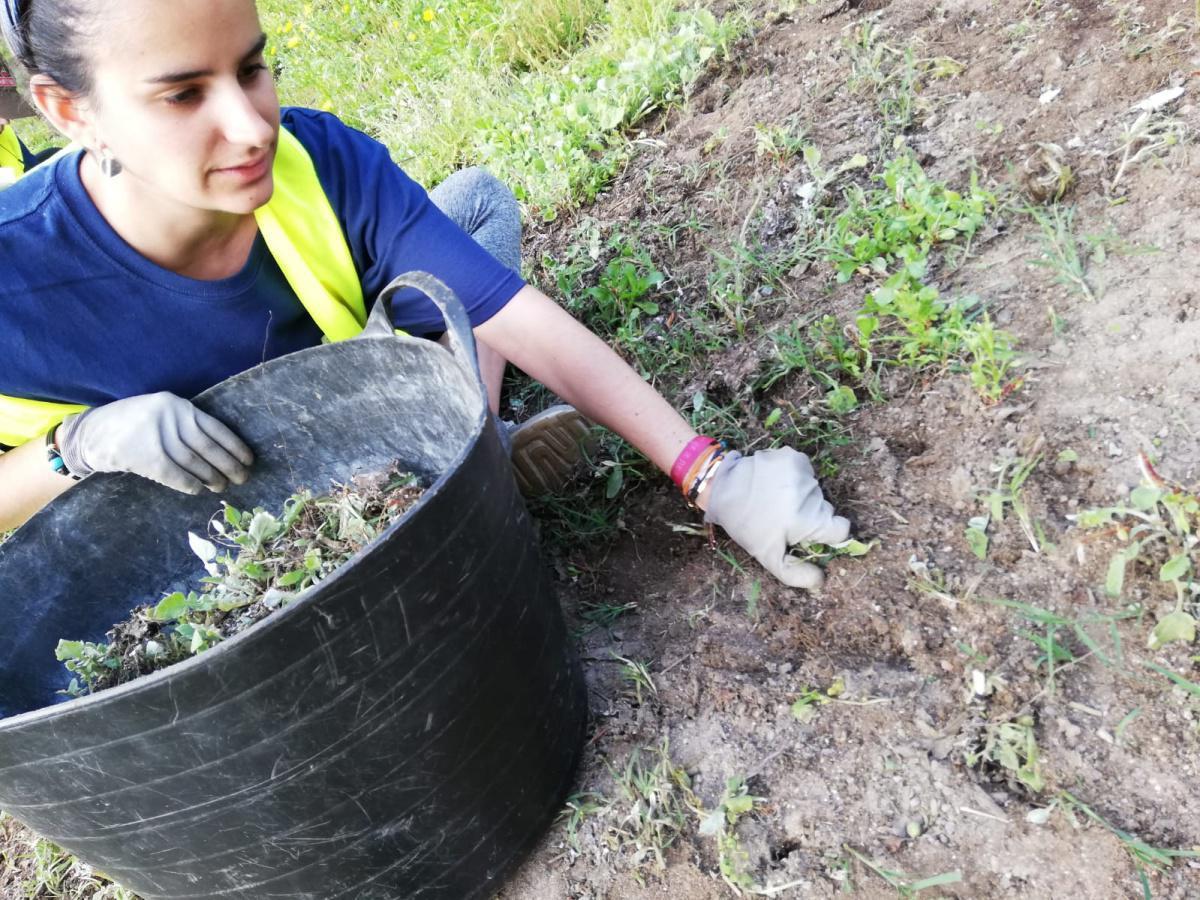 UNHA TRINTENA DE VOLUNTARIOS RETIRAN DAS ILLAS DE ONS E CÍES MÁIS DE 1.400 QUILOS DA PLANTA INVASORA 'MARGARITA AFRICANA'