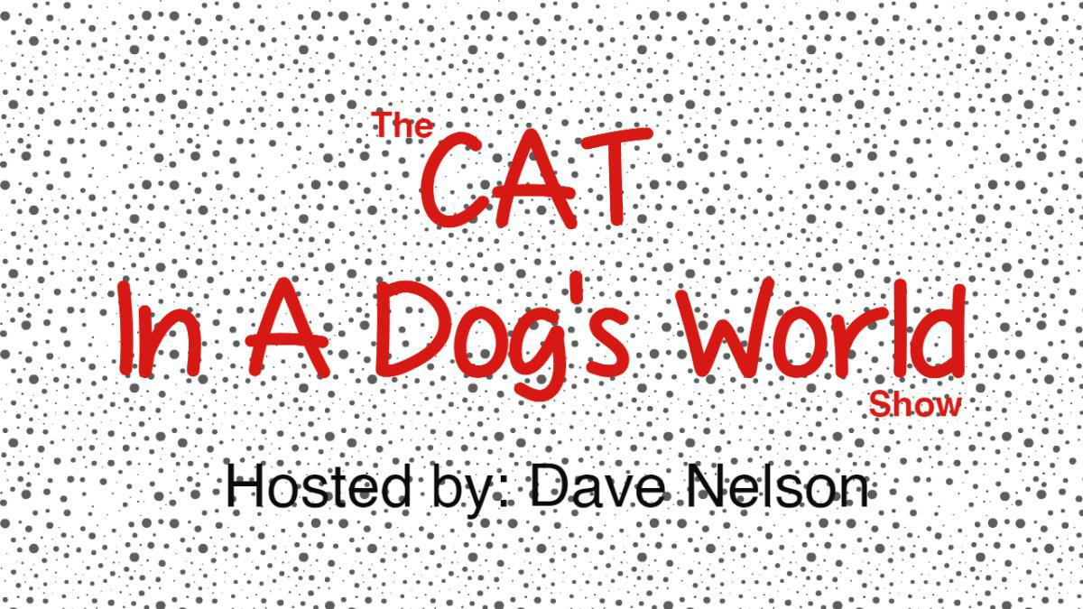 Cat In A Dog's World (Host: Dave Nelson)