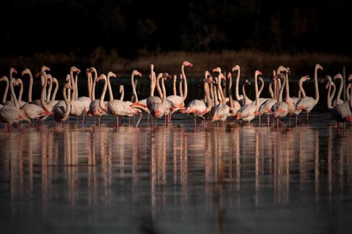 Ogni mese à u Stagnu di Chjurlinu - Visites thématiques sur l'ornithologie à la réserve naturelle de l'étang de Biguglia