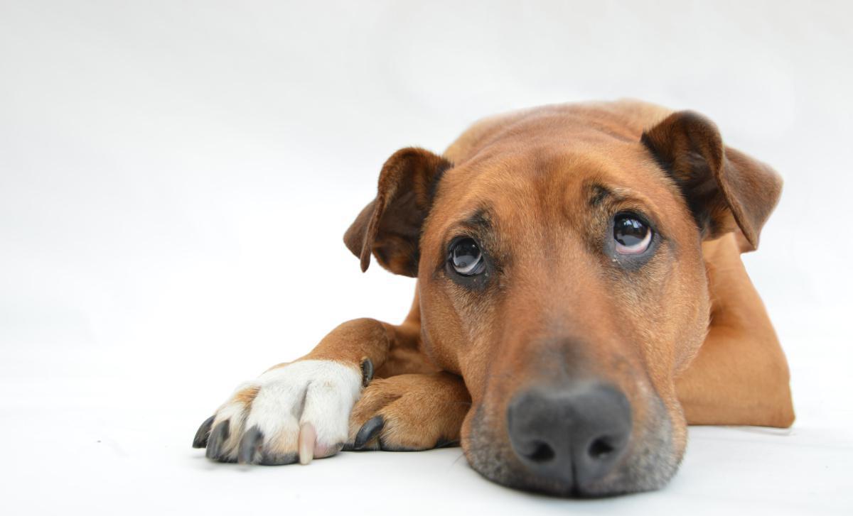 Pourquoi soucrire une assurance santé pour votre chien et/ou votre chat ?