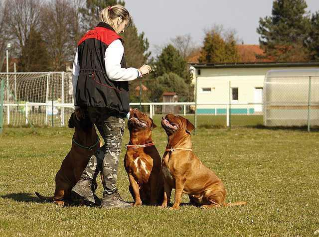 Contrat maîtres-chiens salariés
