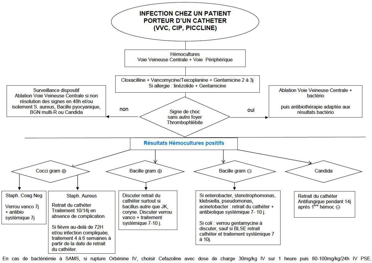 Infection chez un patient porteur d'un catheter (VVC, CIP, PICCLINE)