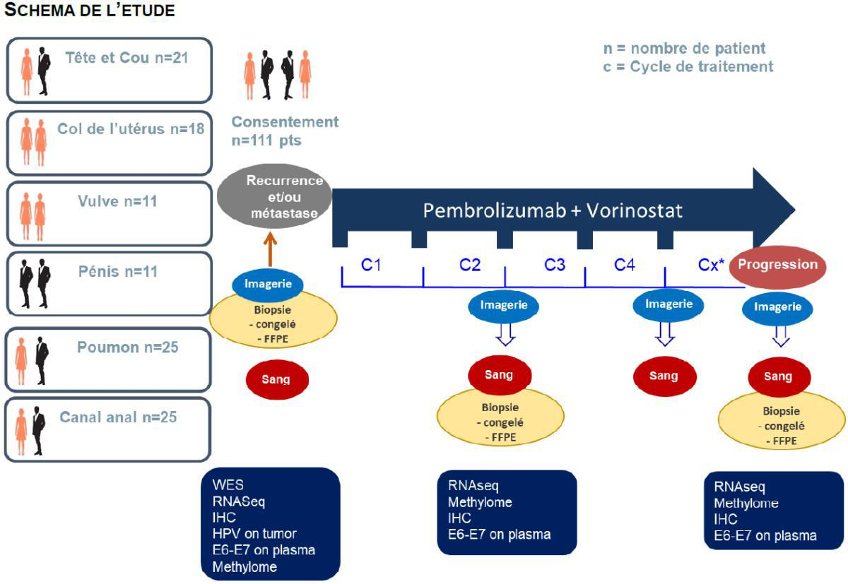Carcinome épidermoïde: l'accès à l'immunothérapie toute ligne