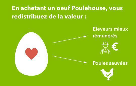 Carrefour s'engage en faveur du bien-être des poules pondeuses