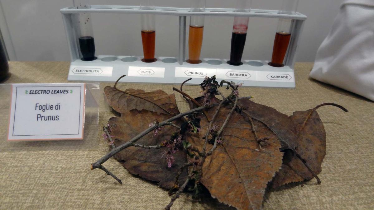 12. Electro Leaves: imitando madre natura per un futuro sostenibile