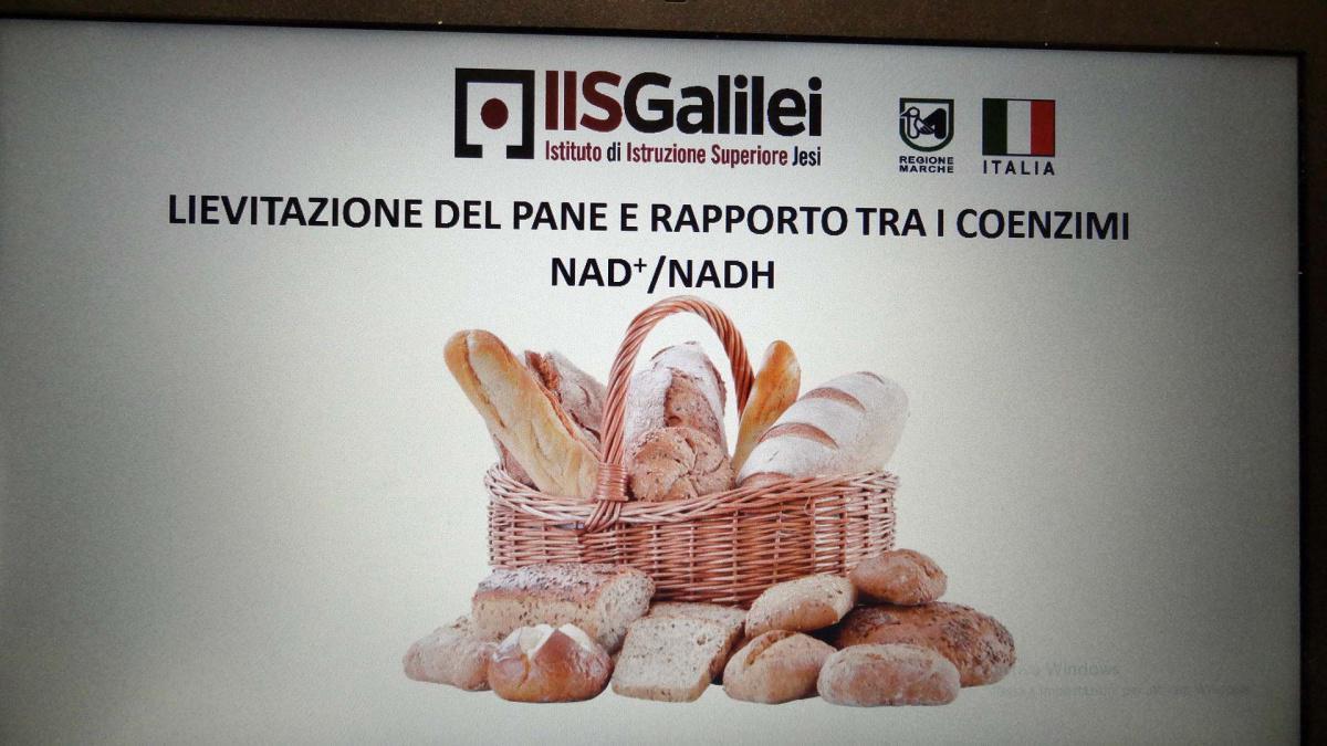 15. Lievitazione del pane e rapporto tra i coenzimi NAD+/NADH