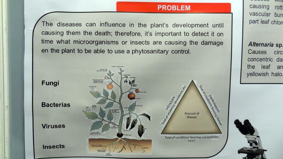 24. Anche le piante si ammalano