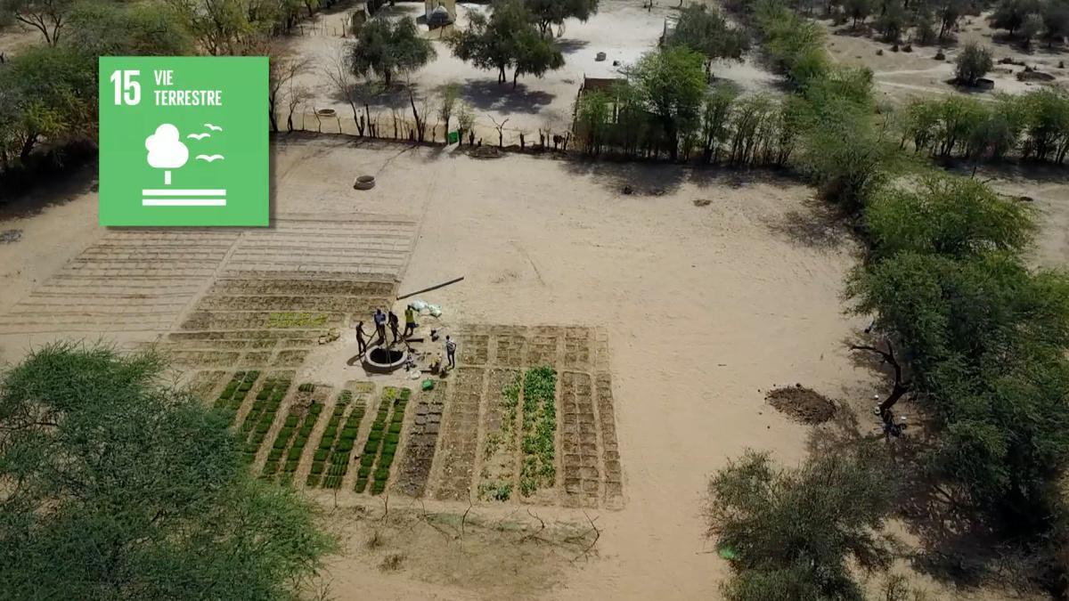 Lutter contre la désertification au Sénégal