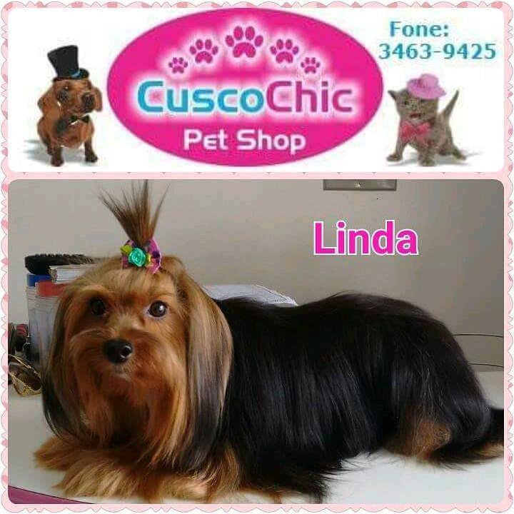 Cusco Chic Pet Shop