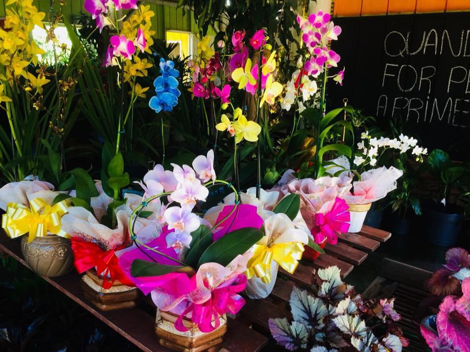 Floricultura Géli Garden
