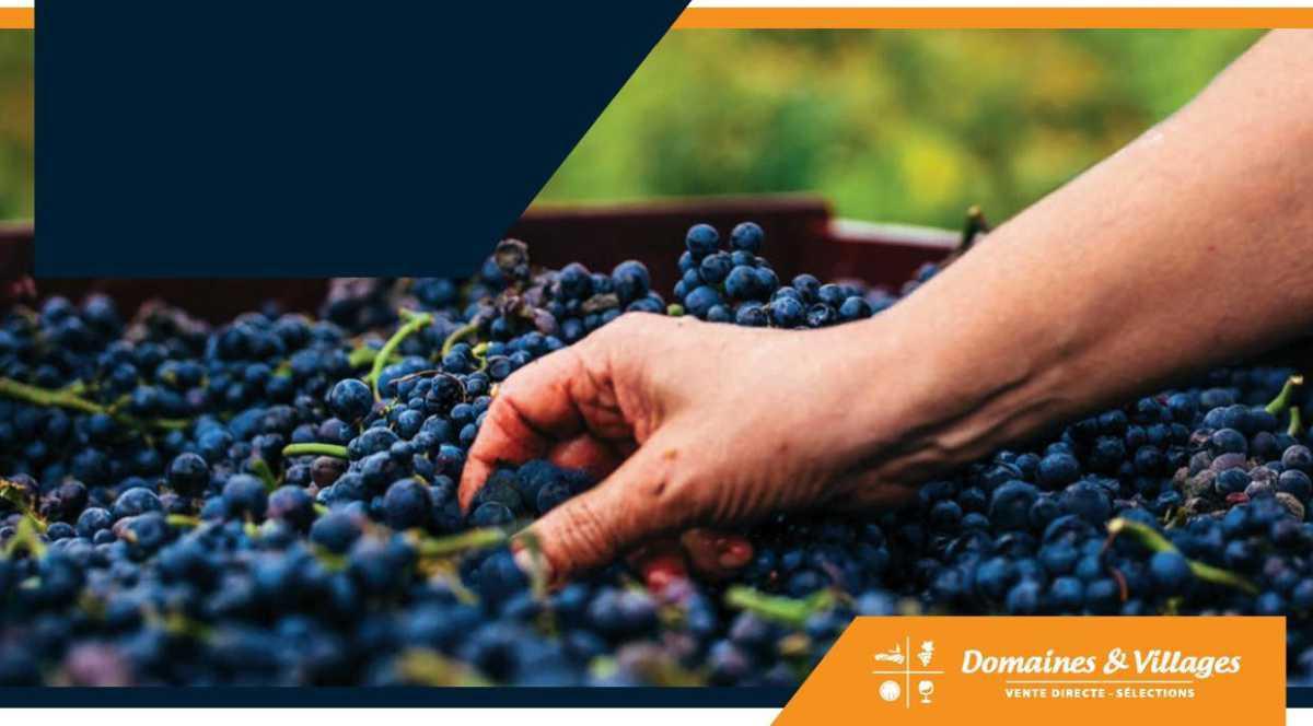 Commande groupée de vins>>Distribution des commandes de Vin Domaines et Villages Mercredi 4 Décembre de 13h30 a 16h salle TGV