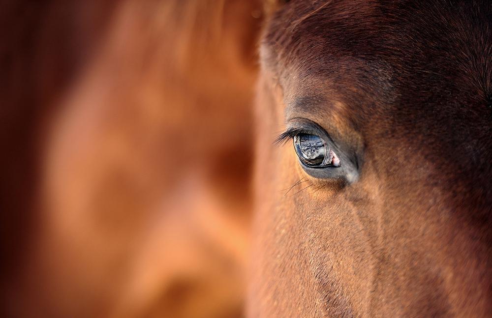 I misteri della mente del cavallo