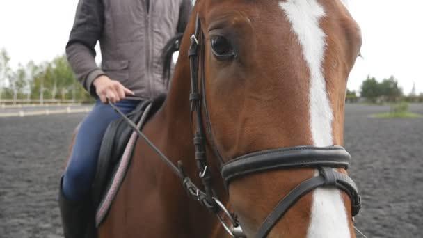 Gli occhi del tuo cavallo: affida la loro cura alla mano di esperti