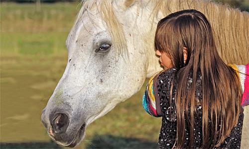 I cavalli reagiscono agli stati d'animo dell'uomo: i cavalli si emozionano!