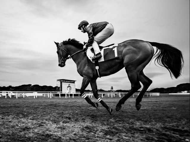 Cavalli da corsa: è sempre uno spettacolo mozzafiato