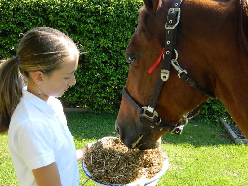 Come sono fatti i denti dei cavalli?