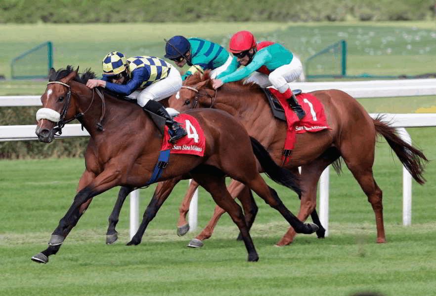 I cavalli da corsa: il trotto