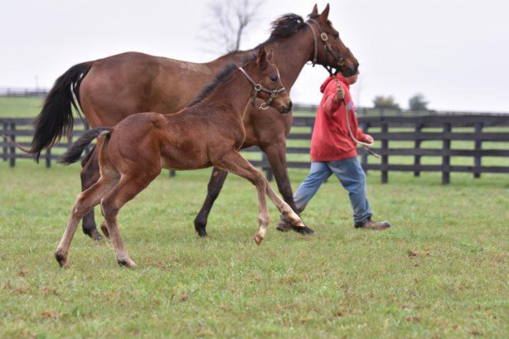 Il mondo dei cavalli: la nascita e l'allevamento di un purosangue