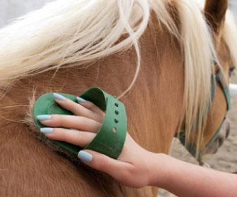 Il momento della pulizia del manto: quel rapporto meraviglioso tra l'uomo e il cavallo