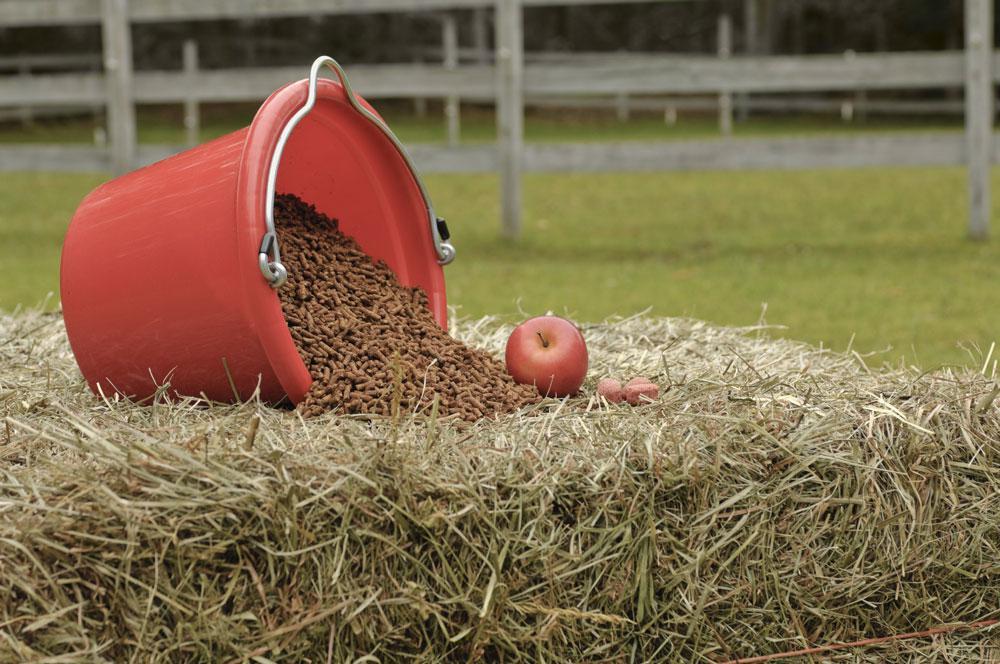 L'alimentazione del cavallo: erba fresca ma non solo