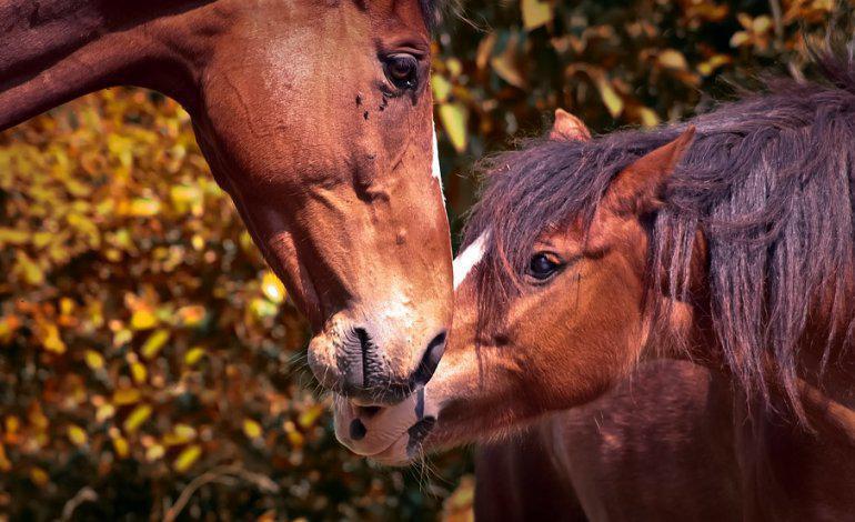 Sensibilità e carattere socievole: i segreti della mente del cavallo