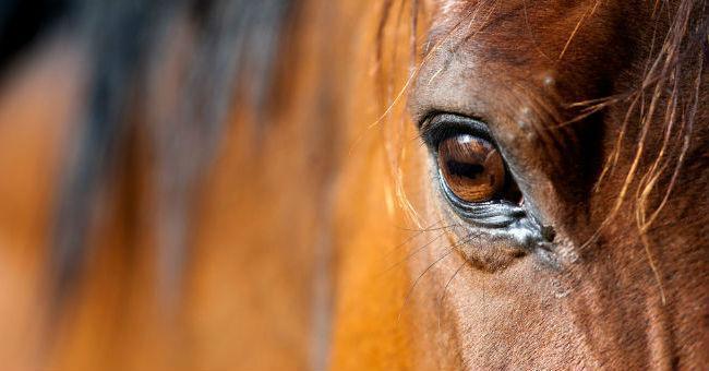 Intelligenza e apprendimento veloce: il fascino di un cavallo