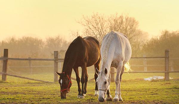 La migliore dieta per il cavallo sportivo