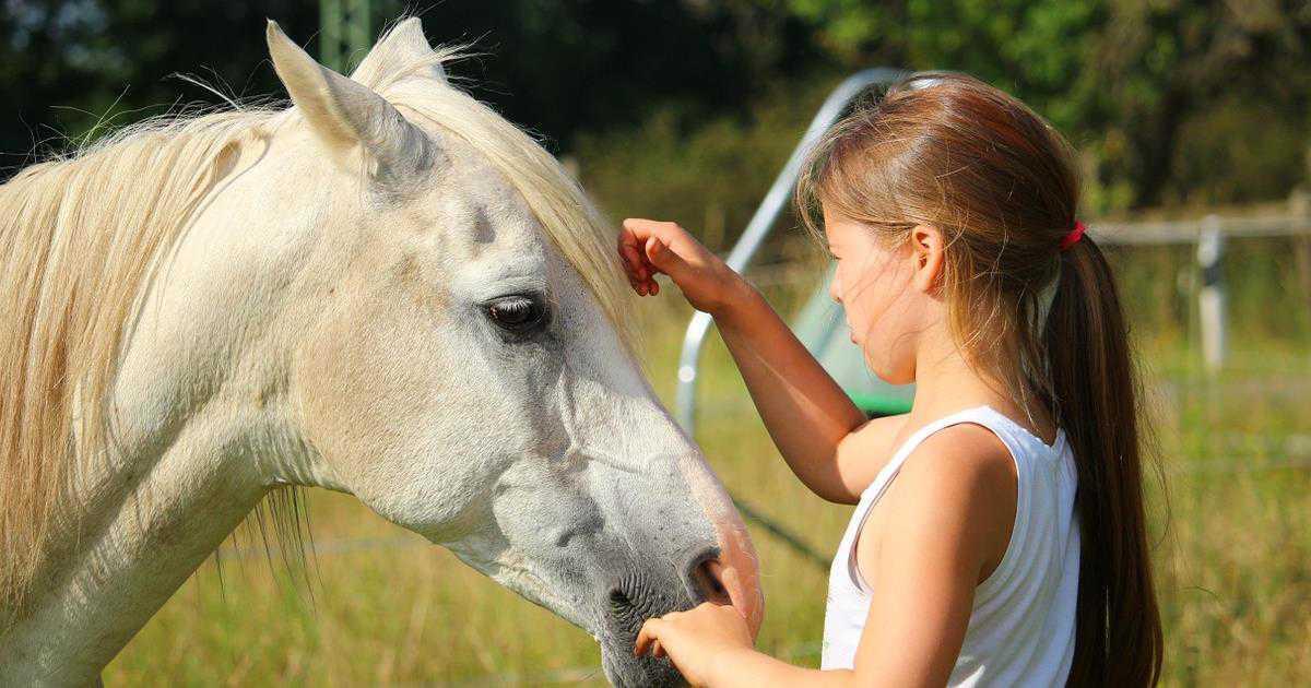 Il cavallo capisce noi, ma noi capiamo il cavallo?