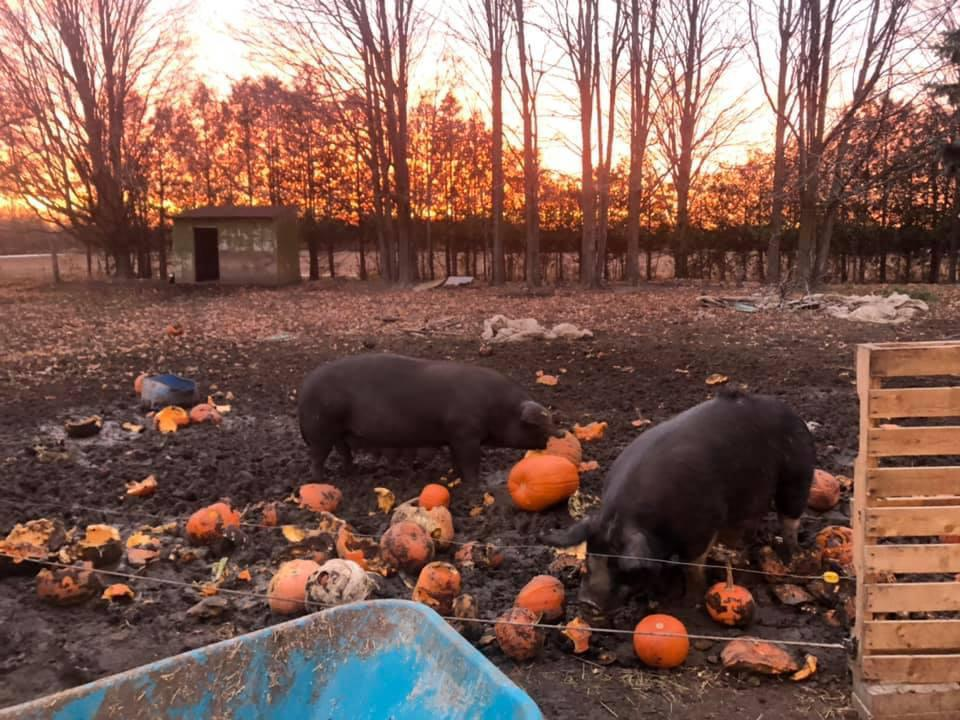 Volunteer Opportunity - Stone Horse Farm Pumpkin Pitch