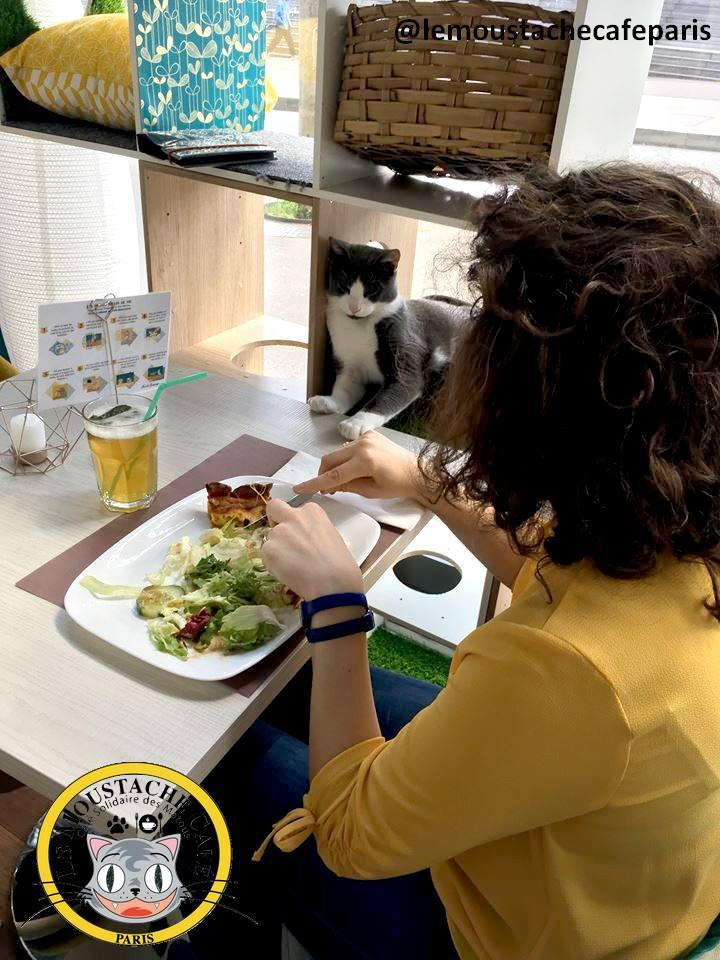 Un Café avec des Chats