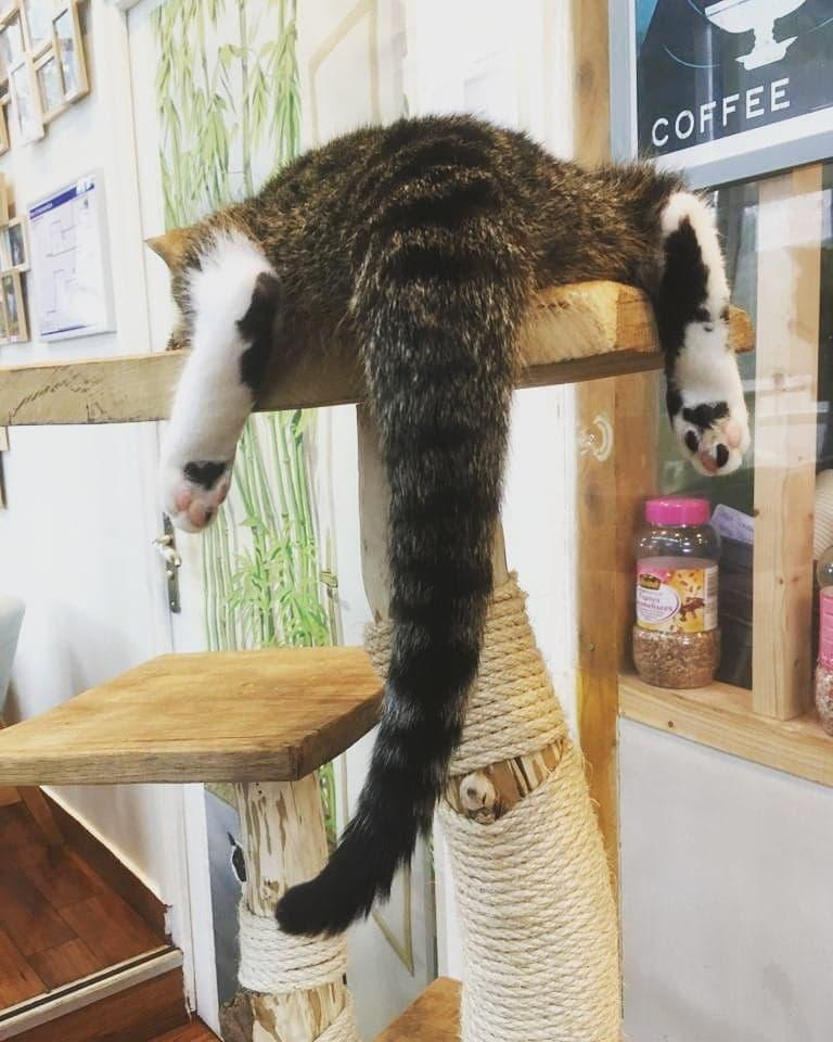 Mon Arbre à Chat