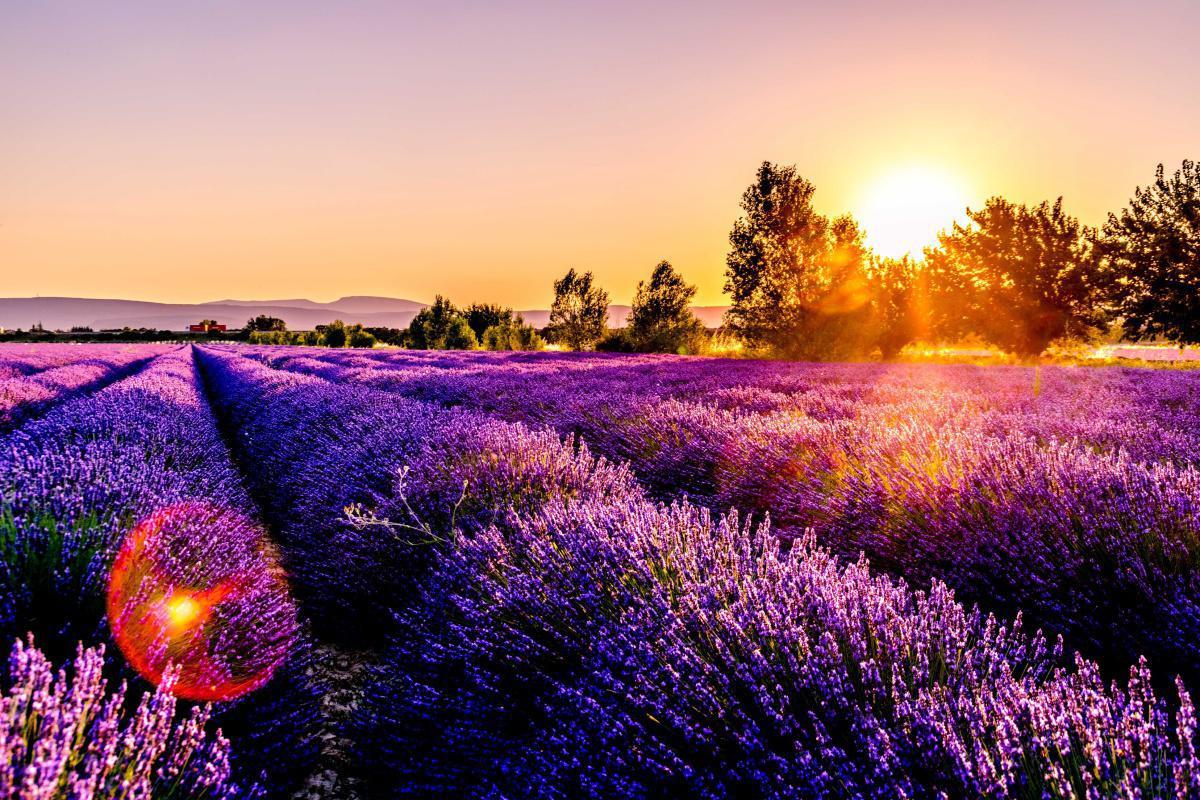 Bain au coeur de la Provence