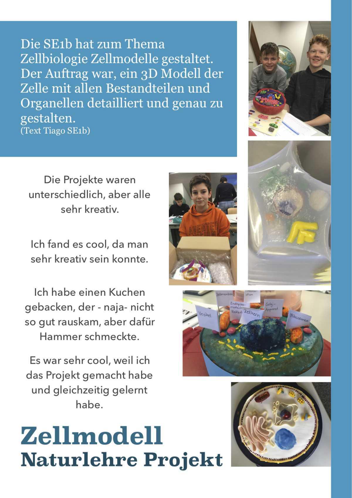 "Modelle zum Thema ""Zellbiologie"" der Klasse SE1b"